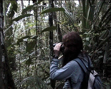 Liza observes the silky sifakas in Marojezy